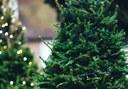 Al gener, campanya de recollida d'arbres de Nadal