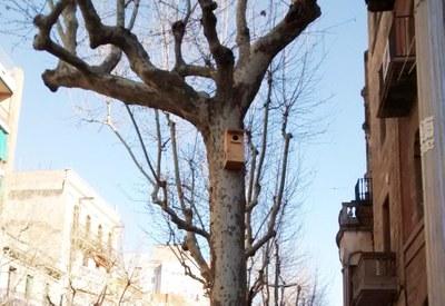 Noves caixes niu per xot a la Rambla Sant Isidre